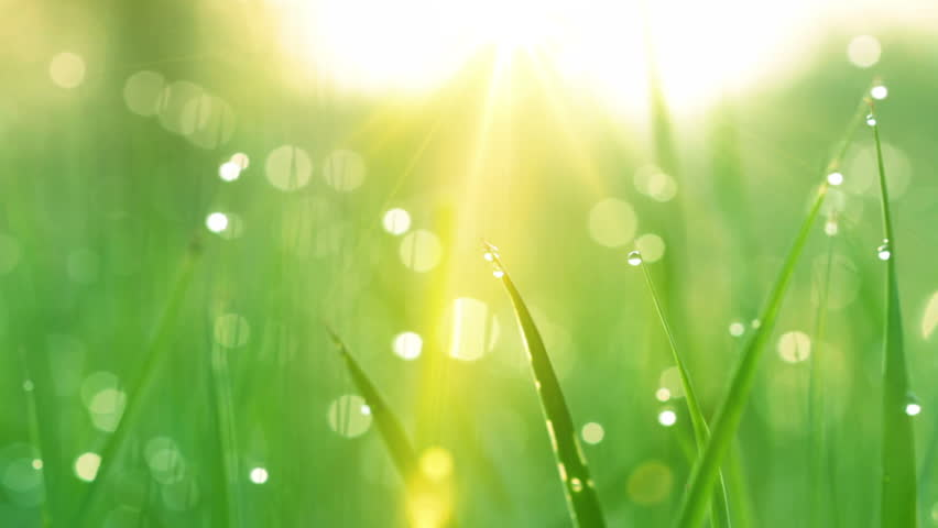 Blurred grass background with water drops and rays of sun. HD shot with motorized slider.  | Shutterstock HD Video #1690921