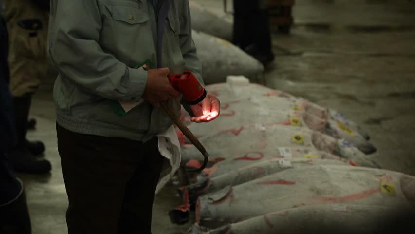 TOKYO, JAPAN - 2015: Tuna Auction at the Tsukiji Fish market.  Buyers inspecting tuna at the morning auction - HD stock video clip