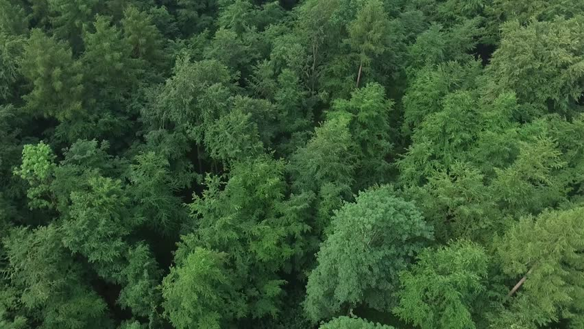 Aerial Drone fly over the North European Forest  | Shutterstock HD Video #16988743