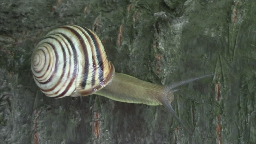 beautiful snail crawl forest home .