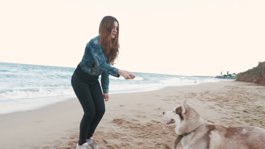 Young attractive girl training siberian husky dog...
