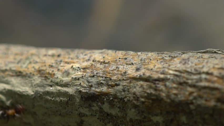 Ants are fleeing the flood - HD stock footage clip