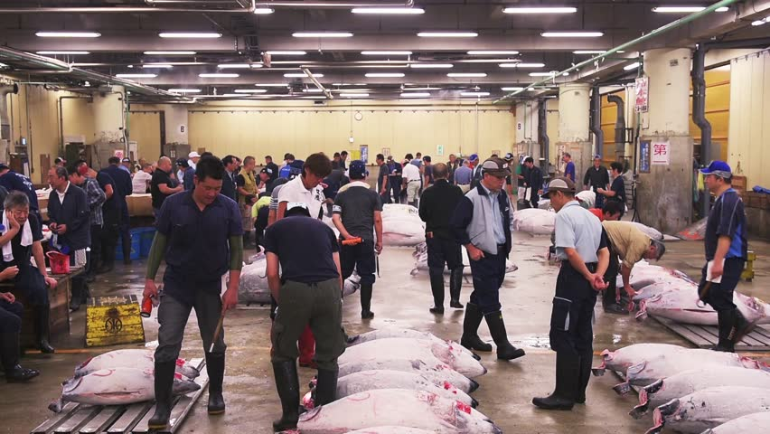 TOKYO, JAPAN - AUGUST 1, 2015: Prospective buyers make bids at Tsukiji Market. Tsukiji is considered the world's largest fish market. - HD stock footage clip