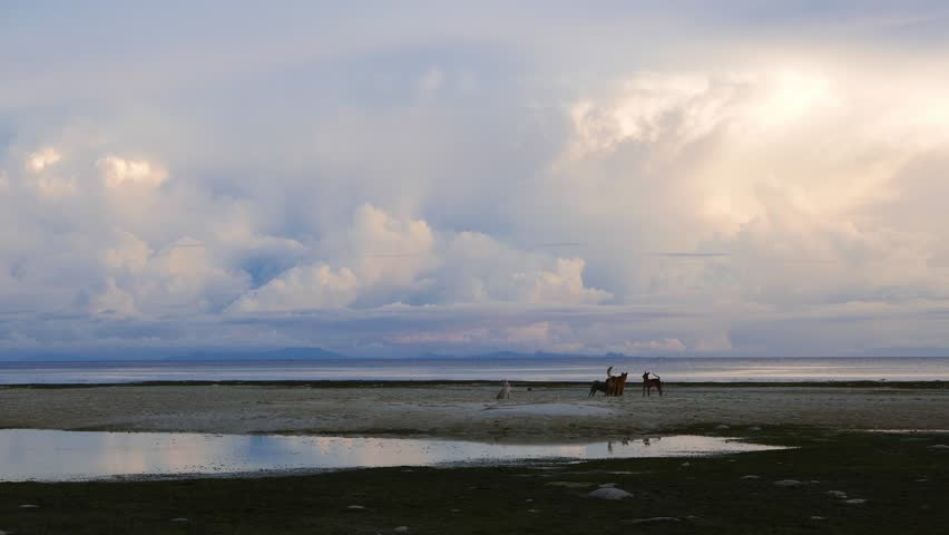 A clip from the white sand beaches of Siquijor, shot during early morning hours. Feral dogs can be seen playing on the sandbar. Presented in real time and originally shot in 4K (Ultra HD) resolution.  #17990857