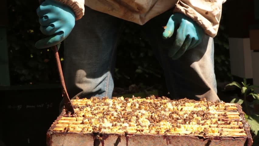 beekeeping - HD stock footage clip