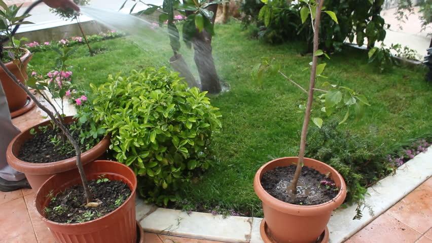 Watering Plants. Gardener watering lawn and flowers.