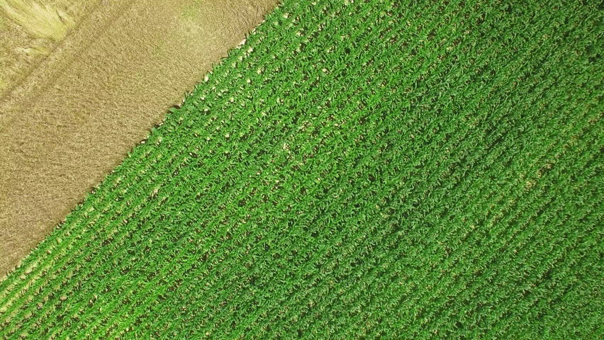 UHD aerial shot of a corn field / Western agriculture land | Shutterstock HD Video #18402184