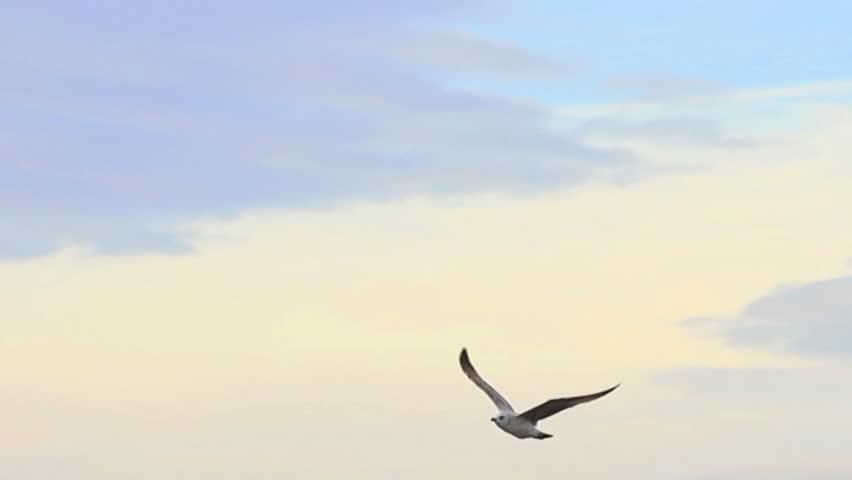 Sea bird soaring through blue sky   #1859149