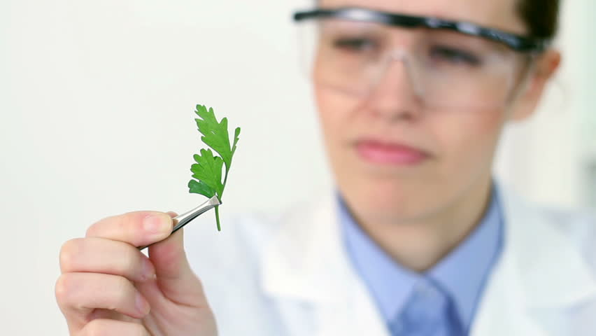 Female scientist analyzing plant, camera stabilizer shot - HD stock video clip