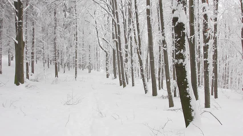 Person walking through the forest in winter