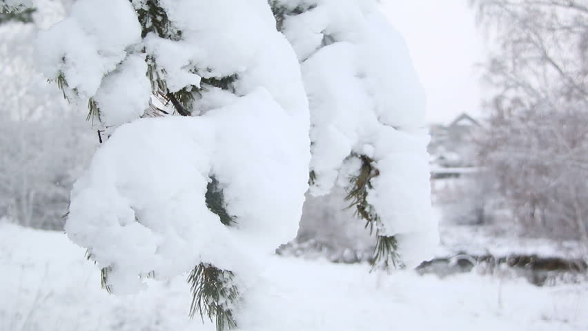 Heavy snow on pine branches | Shutterstock HD Video #19129861