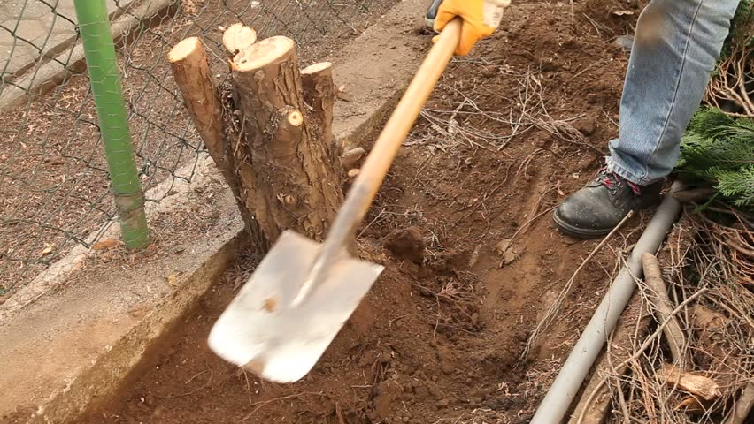 Pulling out tree roots - HD stock video clip