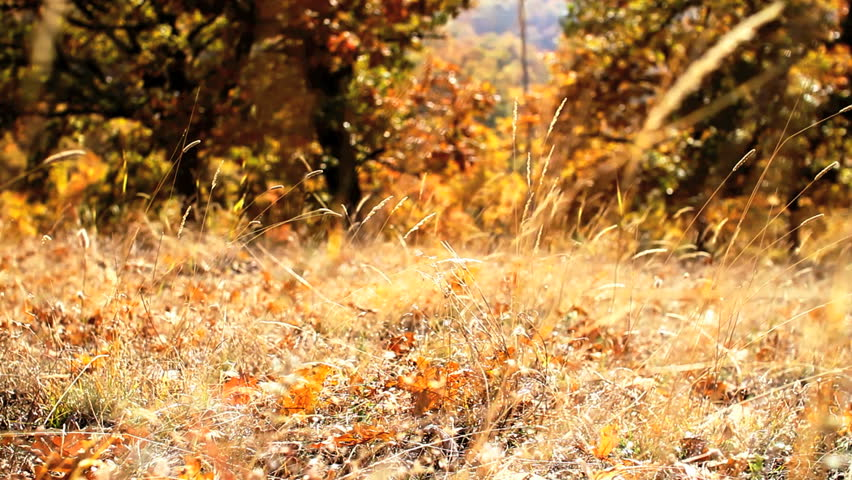 autumn natural - HD stock footage clip