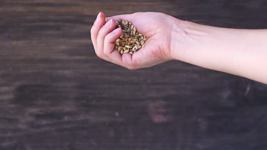 Slow motion of female hand pours grain - wheat, rye , barley , on the background of wooden wall | Shutterstock HD Video #19652437