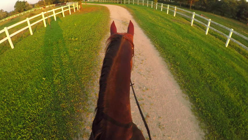 FPV, CLOSE UP: Horseback riding powerful dark bay stallion at magical golden light evening on beautiful countryside horse ranch. Powerful gelding walking on dirty pathway at peaceful sunny morning | Shutterstock HD Video #20184031