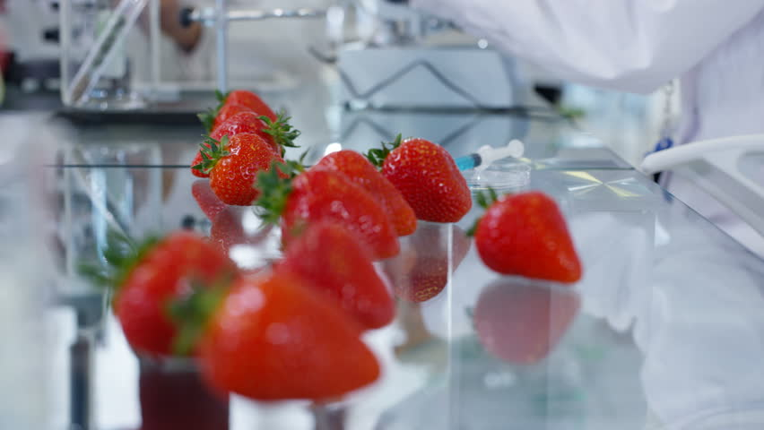 4K Food science researchers working in laboratory, 1 woman injecting chemicals into strawberries. Shot on RED Epic.
