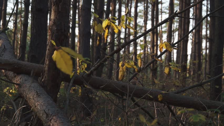 Last leaves on the trees in the forest in autumn | Shutterstock HD Video #20337508