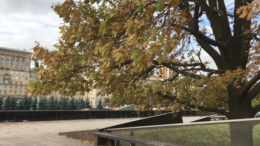 oak in the town square - HD stock video clip