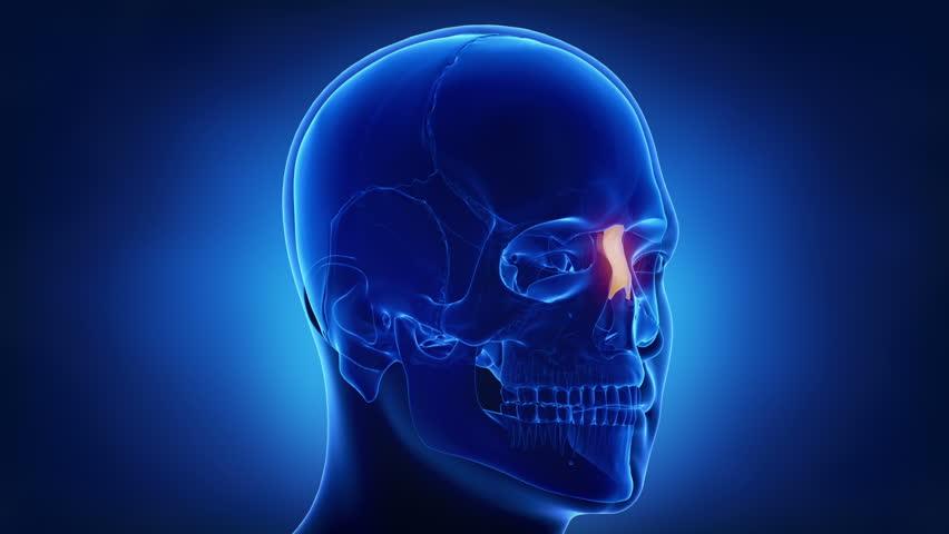 Blue x-ray skull animation - NAsal bone - os nasale | Shutterstock HD Video #20512351