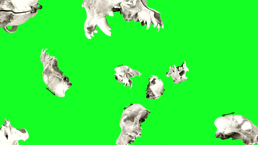 Spinning Dog Skulls Green A stop motion of a spinning dog skull multiplied to form this animation. | Shutterstock HD Video #21168865