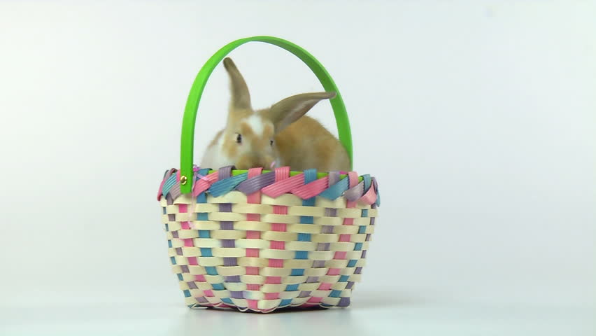 Easter Bunny in an Easter Basket - HD stock footage clip