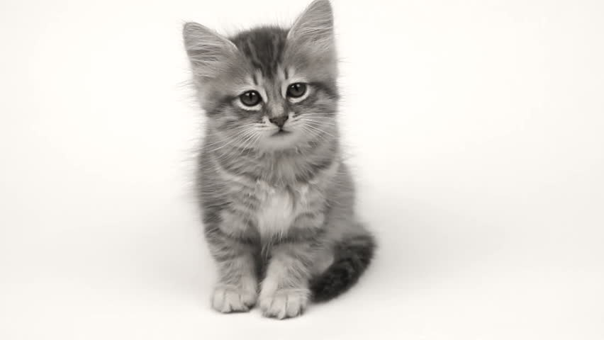 cute kitten on white background stock footage video