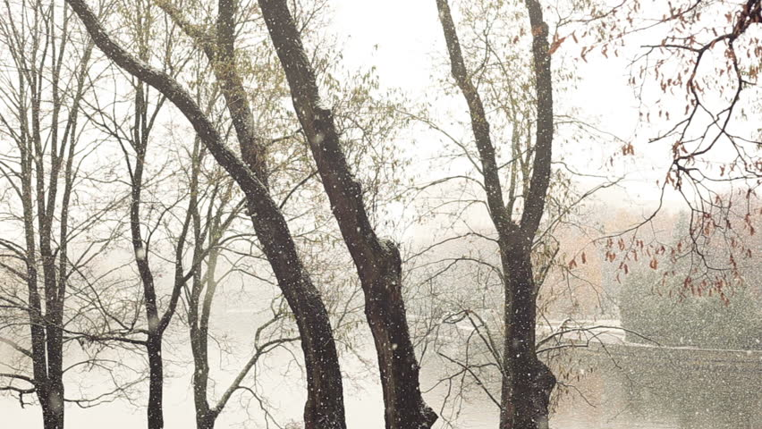 Snow falling in the park. | Shutterstock HD Video #22169989