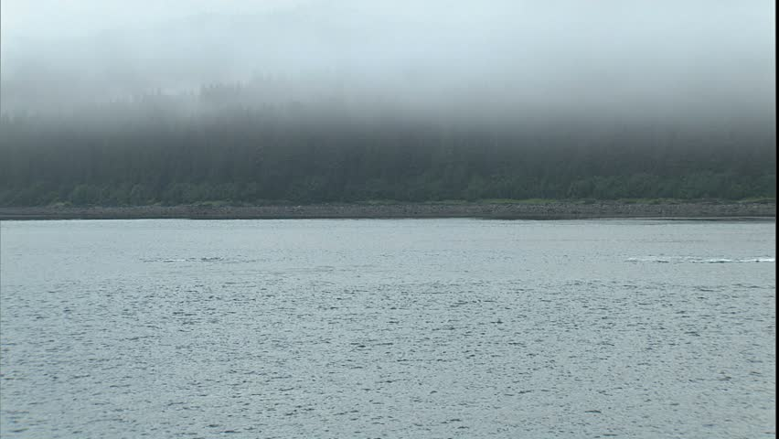 Fin Slapping and Breaching Humpback Whales, Point Adolphus, Alaska - HD stock footage clip