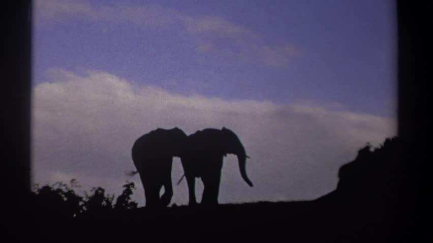KENYA 1969: two elephants on a hill top | Shutterstock HD Video #22339135