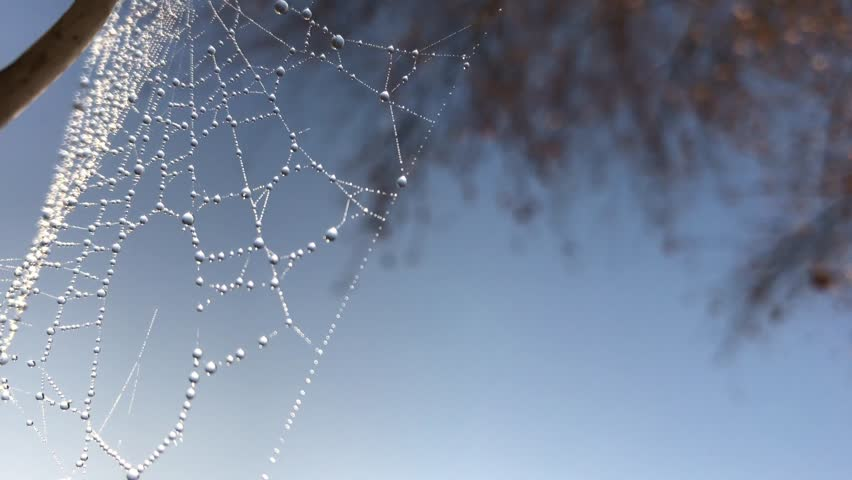 Beads of water on a spiders web under blue winter afternoon sky #22645837