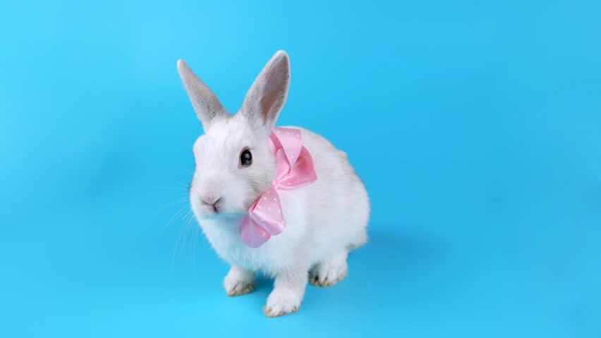 bunny rabbit sniffing around - photo #19