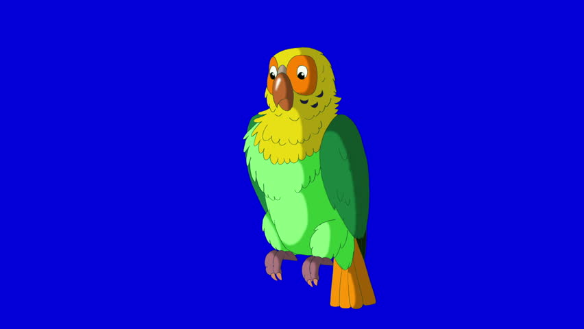 Green Parrot Cleans Feathers. Animal on Blue Screen. Looped motion graphic. | Shutterstock HD Video #23184838