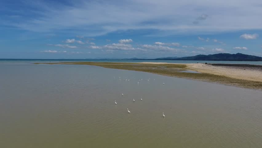 Flying over flock of herons on the sea shallow, Thailand, 4k | Shutterstock HD Video #23887558