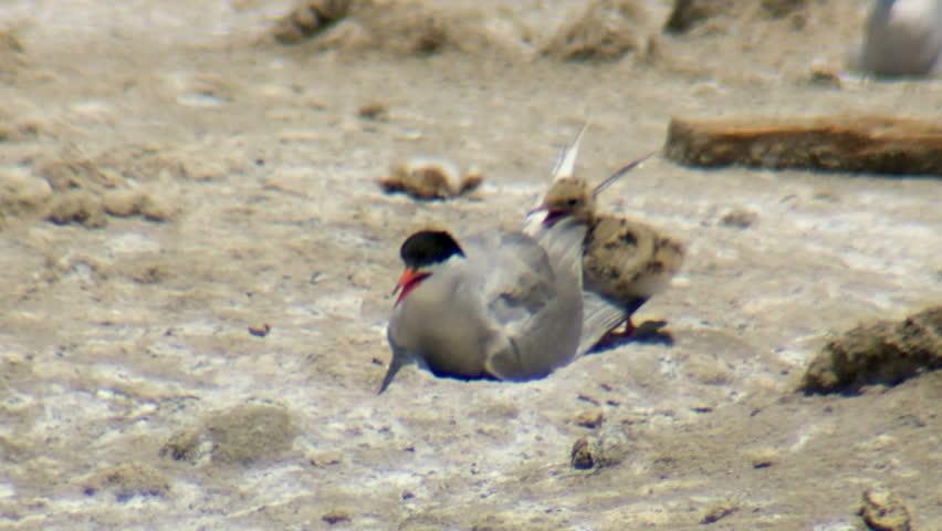 Header of terns