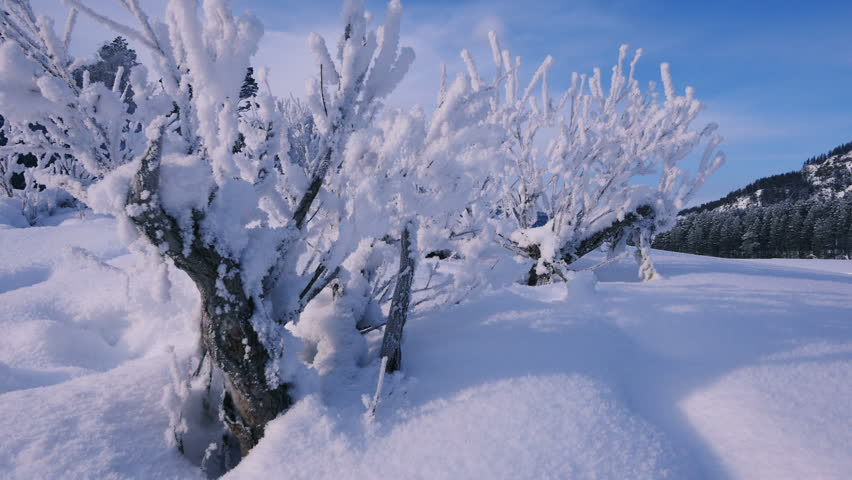 Header of Altai Mountains