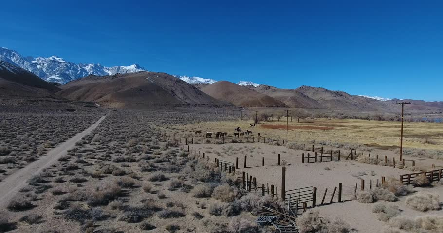 Aerial view by drone of a horse ranch 4k 24fps | Shutterstock HD Video #24115708