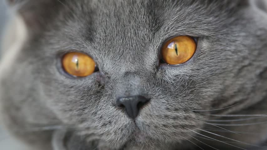Close up of cat's eyes | Shutterstock HD Video #24133735