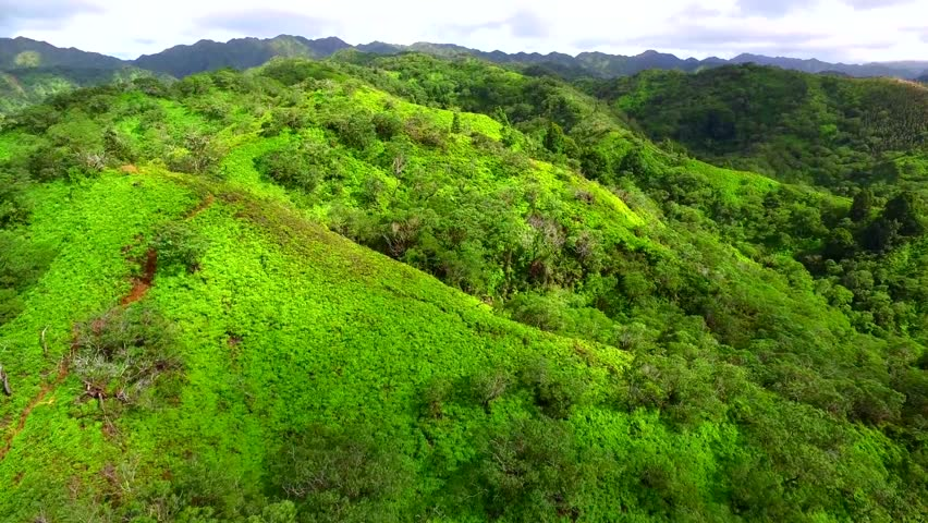 4k aerial shot of amazing green forest in mountains, beautiful nature landscape | Shutterstock HD Video #24152797