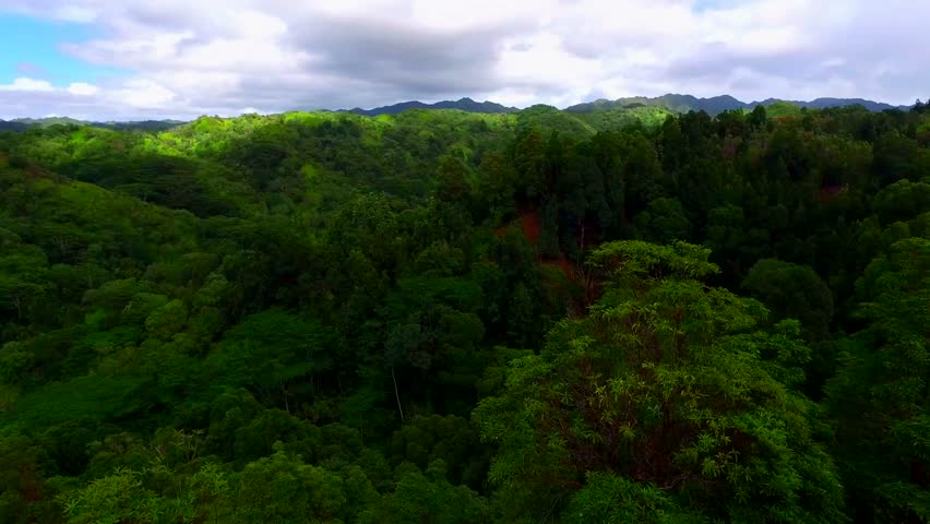 Amazing 4k aerial view on evergreen dense forest with trees on top of mountain | Shutterstock HD Video #24152806