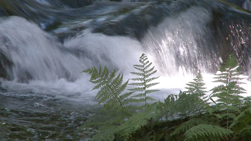 Beautiful small waterfall in forest - HD stock video clip