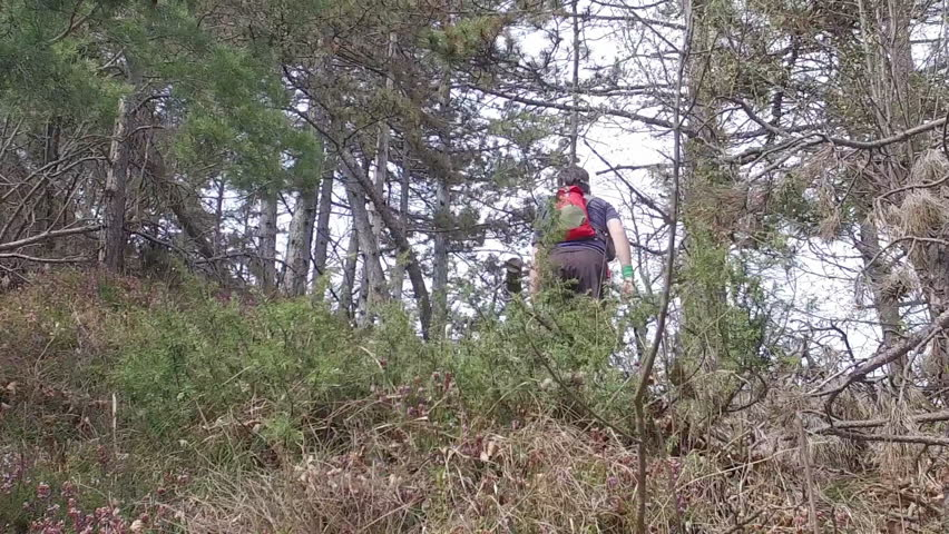 A man with sports equipment and sports clothing hiking at Mala Grmada, Polhograjski Dolomiti. Hiking with backpack on a footpath with root, through coniferous forest. SLO MO.  | Shutterstock HD Video #27174376