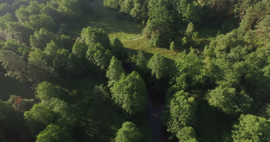 Forest summer day young green fresh foliage aerial panorama 4k belarus | Shutterstock HD Video #27454141