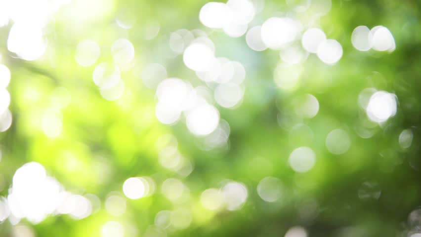 Sunlight shining through the leaves of trees, natural blurred background, Nature abstract background, nature green bokeh  | Shutterstock HD Video #28280053