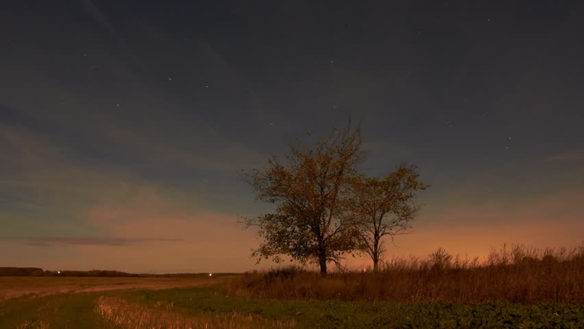 Night sky of stars time-lapse - Two trees, clouds, moonlight, field landscape