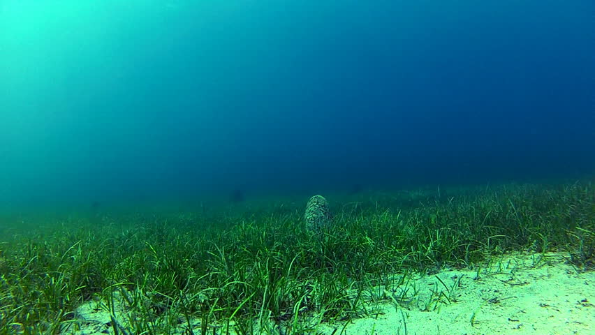 Rich seabed  Description: Clean sea with Neptune grass and Noble pen shells.