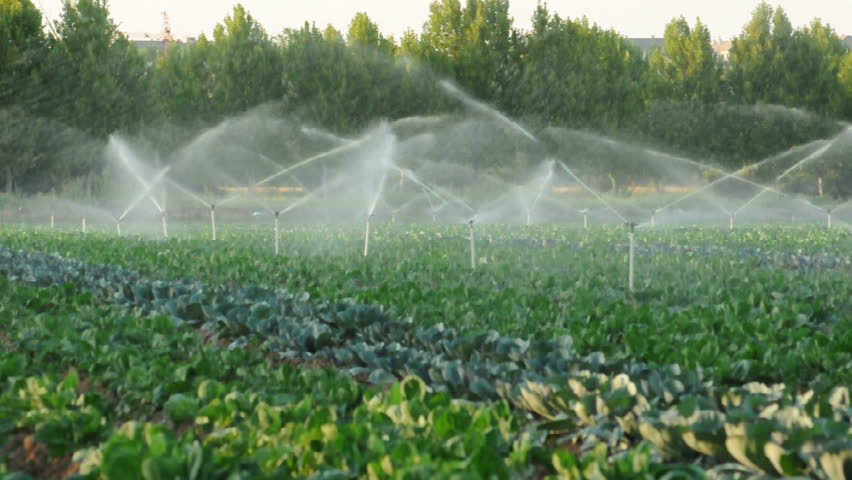 Irrigation Systems In A Green Vegetable Garden Stock