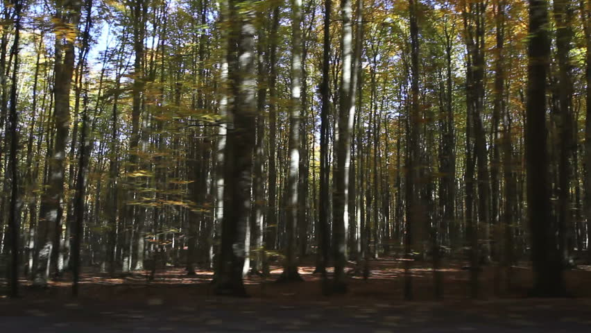 Admiring autumn forest scenery passing through the side window of the car while driving - HD stock video clip