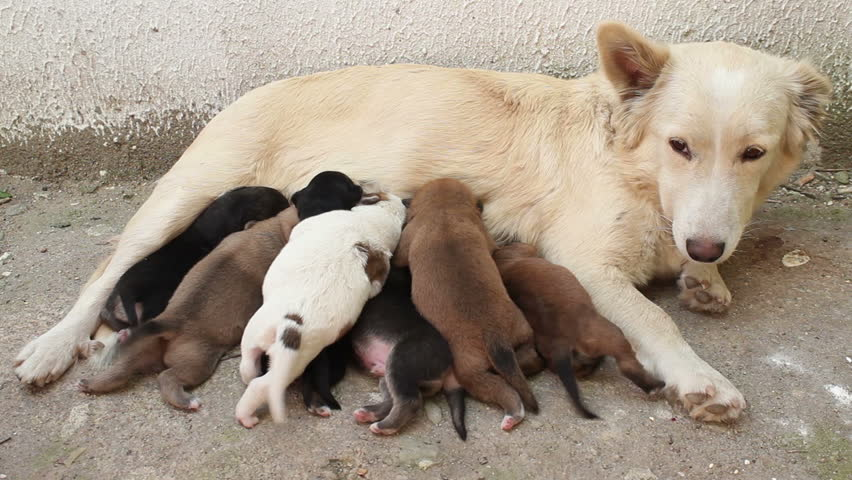 Image result for dog feeding pups punjab
