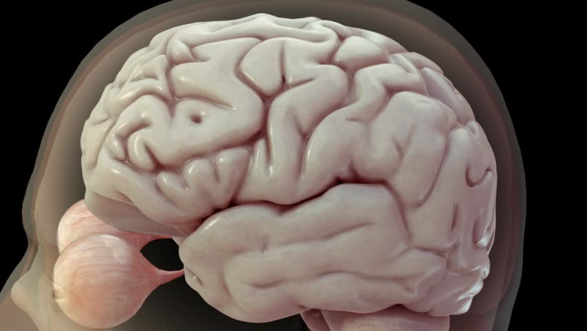 realistic 3D anatomical model showing central nervous system including brain and eyes and then transitioning to high zoom of electrical activity via neurotransmitters and action potentials - HD stock video clip