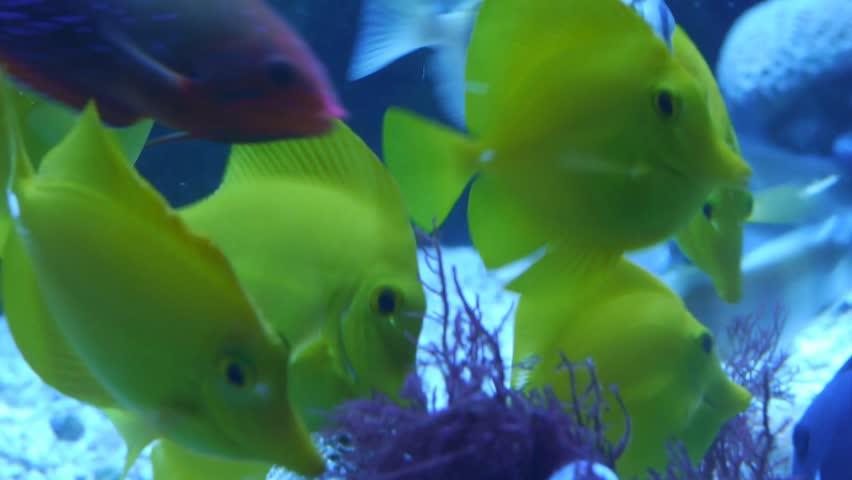 cu school of neon blue doctor fish pass over bright green elkhorn, Reel Combo